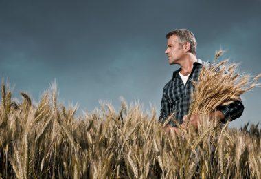 Agricultor em campo de cereais