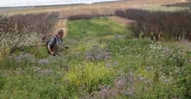 Apoios ao aumento da biodiversidade na agricultura