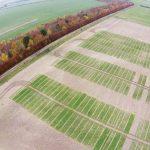 Contra el cambio climático, el desarrollo de nuevas variedades vegetales es fundamental