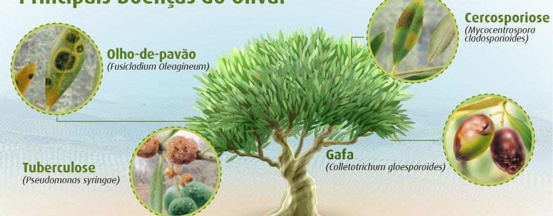 A importância da proteção do olival no Outono